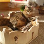 Bettchen für Katzen Liegemulden Indivieduelles Bett für Katzen Kratzbaum massiv