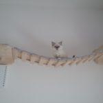 Catwalk Hängebrücken