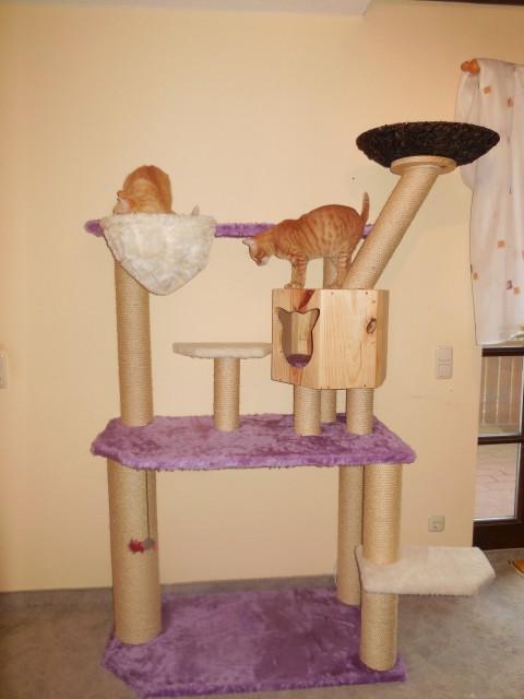 Katzen erkunden Ihren neuen Kratzbaum und gehen gleich in Liegemulde