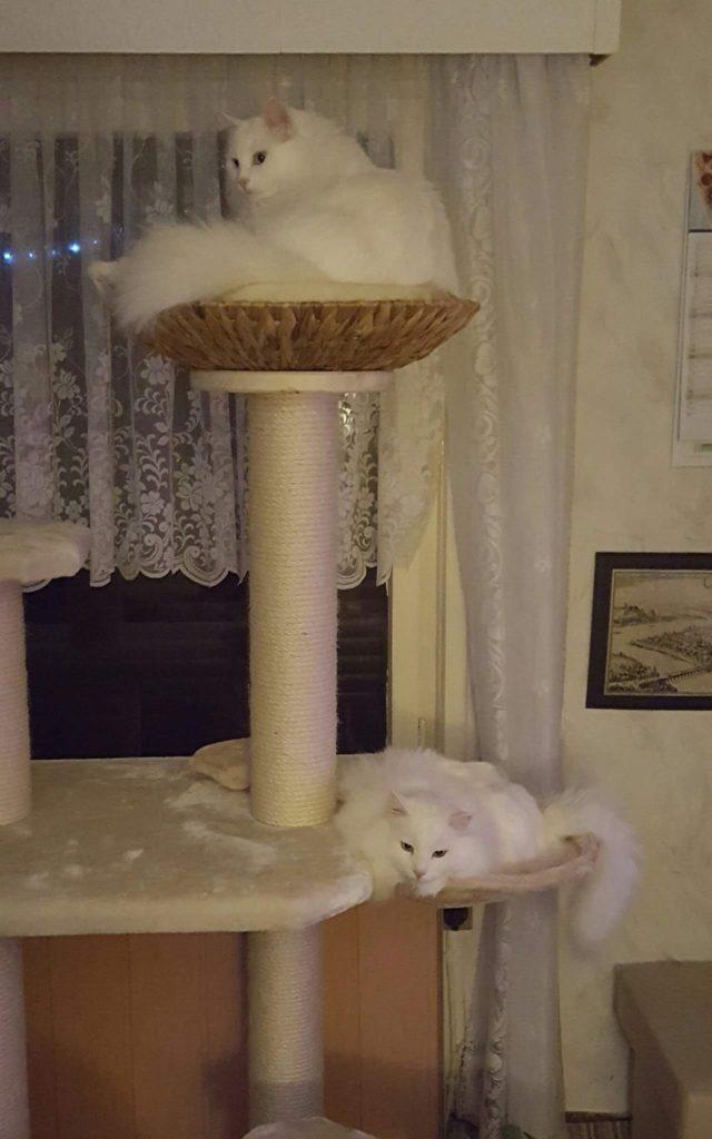 exklusiver kratzbaum stabil naturkratzbaum f r grosse katzen. Black Bedroom Furniture Sets. Home Design Ideas