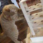 fummelbrett-intelligenzspielturm-fuer-katzen