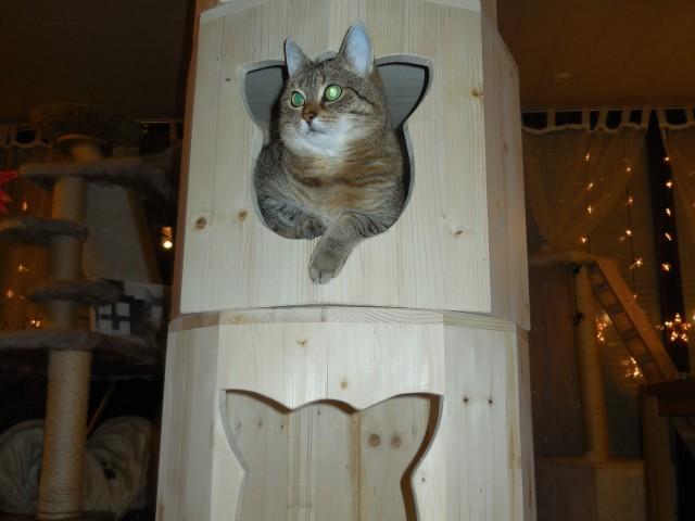 Höhlenturm mit verschiedenen Schlafmöglichkeiten für Katzen