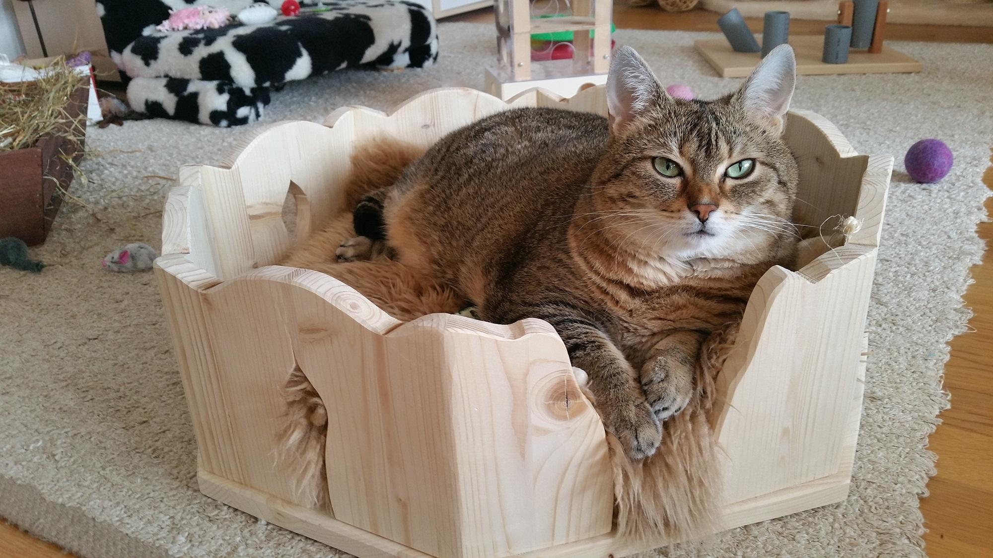 indivieduelles katzenbett bett f r katzen kuschelbettchen. Black Bedroom Furniture Sets. Home Design Ideas