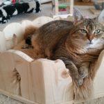 Indivieduelles Katzenbett Bett für Katzen Kuschelbettchen Plüschbett