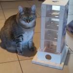 Intelligenzspiel Katzenspiel