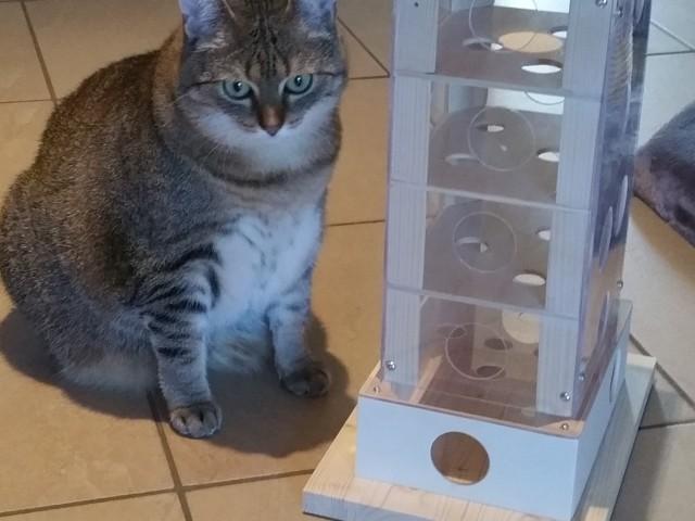 Stella wartet auf die Befüllung des Intelligenzspielzeuges mit Trockenfutter