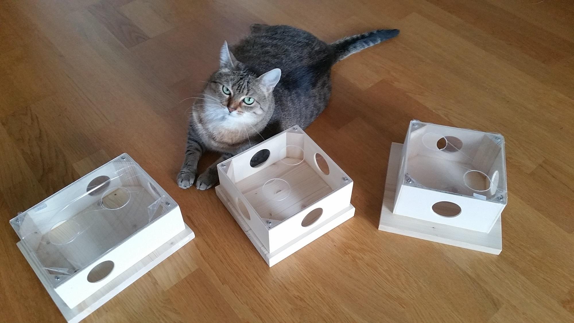 katzenspielzeug fummelbrett intelligenzspielzeug f r katzen. Black Bedroom Furniture Sets. Home Design Ideas