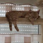 Katzenbaum Catwalk