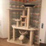 Katzenbaum massiv