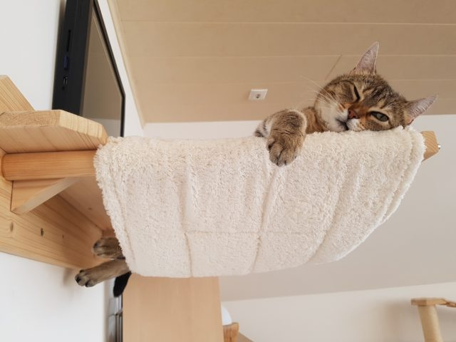 Katzenbett Hängmatte