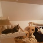 Katzenbett für die Wand