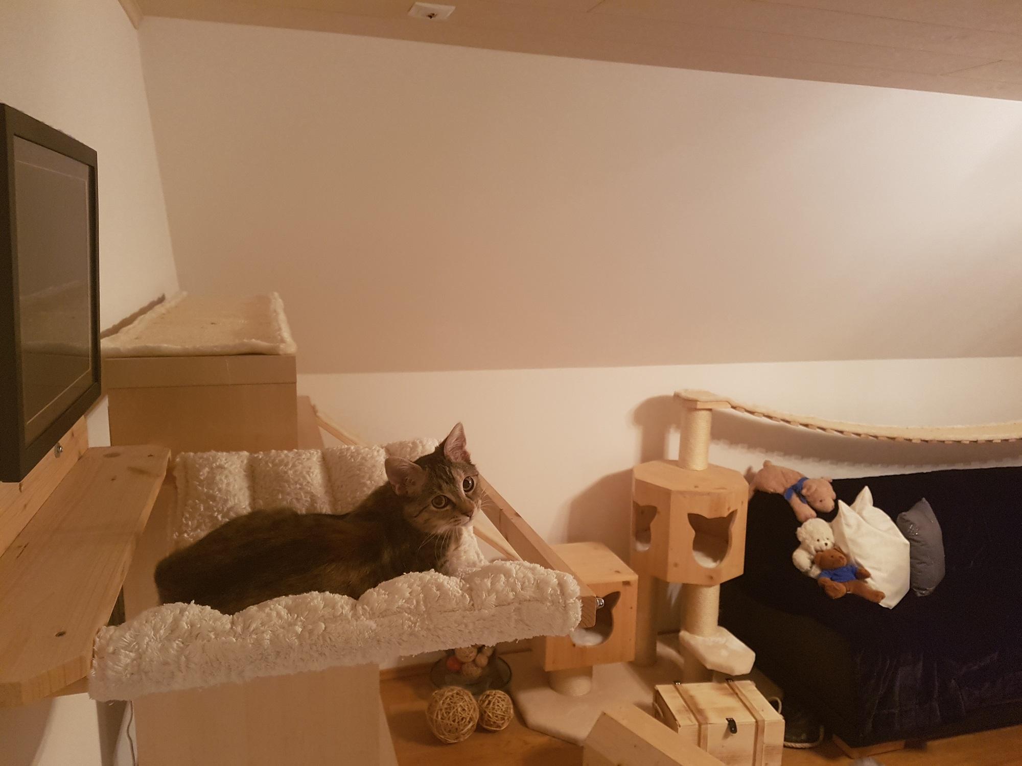 katzen wand selber bauen katzenbett selber bauen ag74. Black Bedroom Furniture Sets. Home Design Ideas