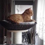 Korb für Katzen