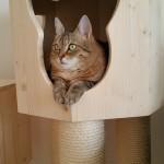 Kratzbaum Katze Höhle