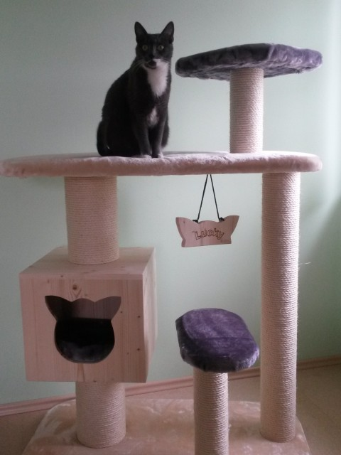 Kratzbaum klein mit Holzhöhle sowie Liegeflächen für große Katzen