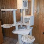 Kratzbaum Miao2