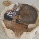 Kratzbaum für Katzen Liegekörbchen Liegemulde für große Katzen Kuschelbett für Katzen