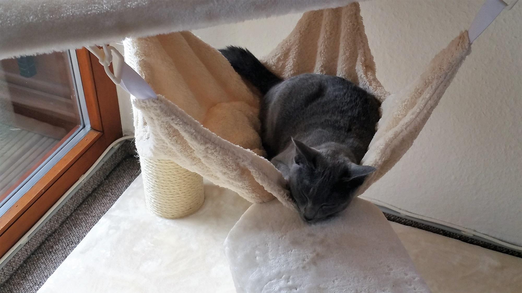 kratzbaum fuer schwere katzen stabil massiv sisalstaemme. Black Bedroom Furniture Sets. Home Design Ideas