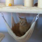 Hänge Ufo für Katzen, Katzenschaukel