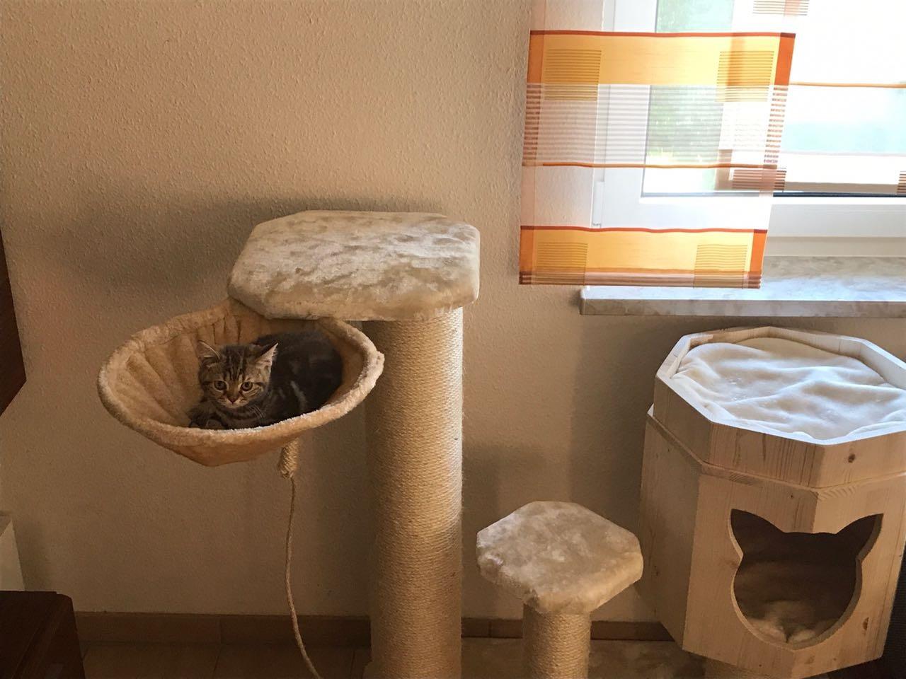 kratzbaum gro e katzen kratzbaum in bamberg zu kaufen gesucht kletterlandschaft. Black Bedroom Furniture Sets. Home Design Ideas