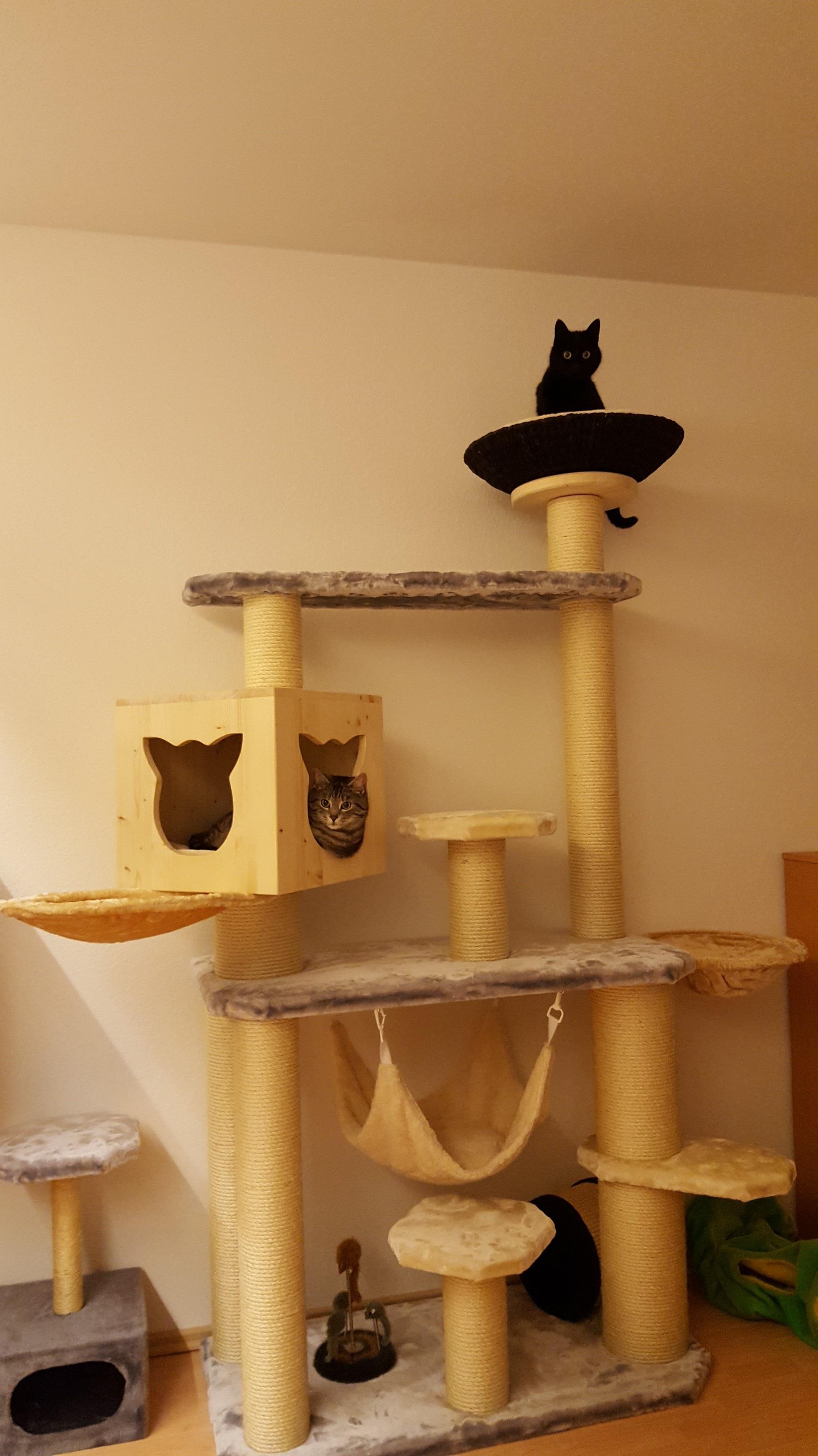 kratzbaum grosse katzen massiv stabil rassekatzen. Black Bedroom Furniture Sets. Home Design Ideas