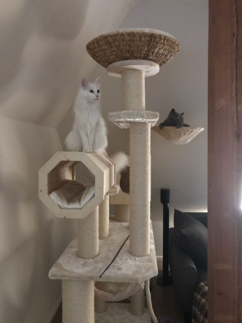 Kratzbaum groß mit Rolle sowie Holzhöhle, Hängemulde mit Katze, viele große Liegeflächen für Katzen