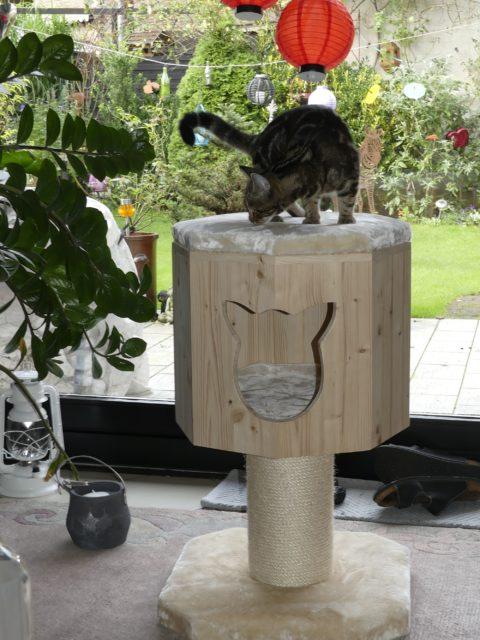 Kratzbaum klein Katze erkundet die Katzenbox