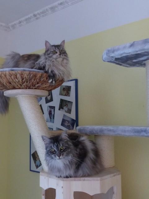 Kratzbaum ohne Deckenspanner für große und schwere Katze