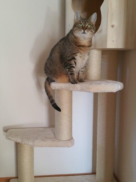 Stella sitzt auf einer sehr weichen Liegefläche und spielt Model
