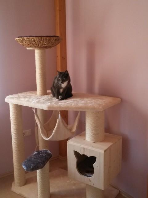 Katze sitzt auf einer großen Liegefläche und spielt Fotomodel, Kratzbaum mit Holzhöhle