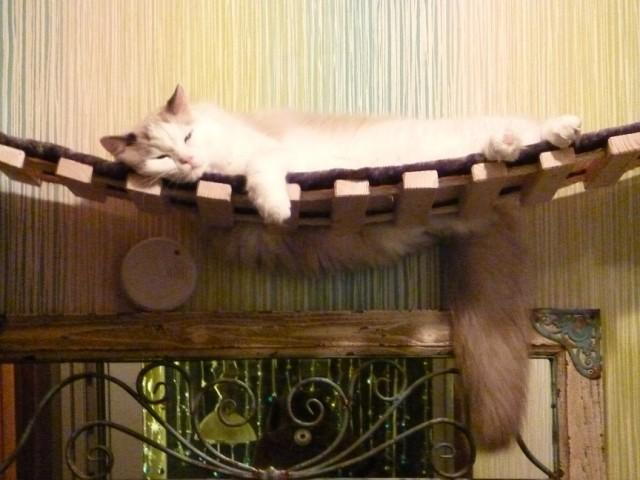 Katze schläft auf der Hängebrücke so bequem