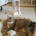 Kuschelbett für Katzen Liegemulde Körbchen für Katzen Fummelbox für Katzen