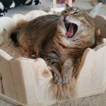 Kuschelbettchen für Katzen Liegemulde für Katzen Schlafplatz Kratzbaum stabil