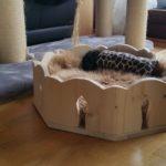 LIegekörbchen für Katzen Kuschelbett Bettchen für Katzen Fummelbrett
