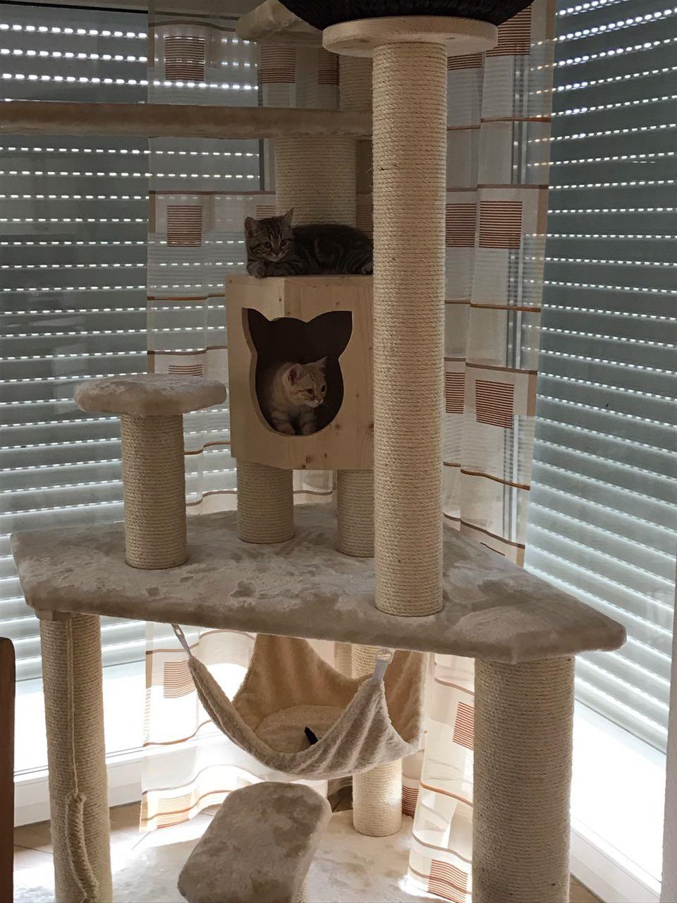 schlafbett f r katzen liegemulde h hle individuelle. Black Bedroom Furniture Sets. Home Design Ideas