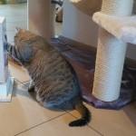 Spiel für Katzen stabil