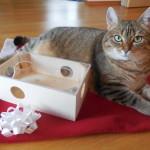Spielzeug Stella, Fummelbox Trockenfutter