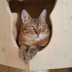 Stabile Höhle für Katzen