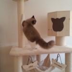 Stabiler Kratzbaum für Katzen