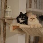 Hängematte mit Holzhalterung für mehrere Katzen