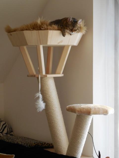 Stella liegt in einer Kratzbaum Sonderanfertigung mit weichem kuschligem Kissen und erkundet die Umgebung