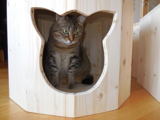 Holzhöhle mit Katzengesicht als Ausschnitt