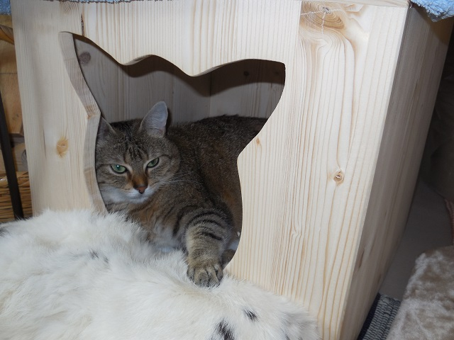 Katze liebt das Ausruhen in einer 4 eckigen Holzhöhle