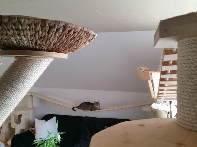 Kratzbaum-welt für Katzen mit Hängebrücken und Liegekorb