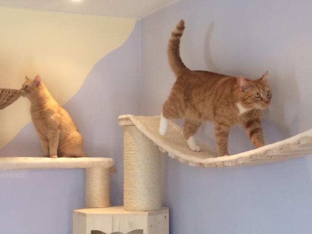 Katze läuft über Catwalk Hängebrücke