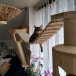 Catwalk Katze