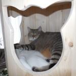 Höhle für Katzen