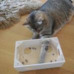 Intelligenzspiel Katze