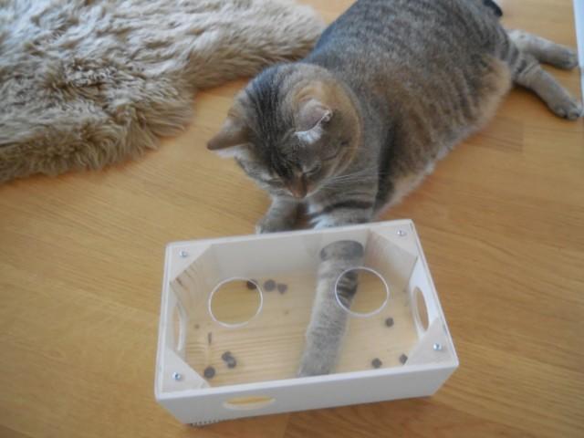 Hauskatze angelt aus Fummelspielbox Leckerlies, Fummelbox mit große Löcher auch für Rassekatzen geeignet