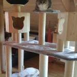 Katzenbaum große Katzen